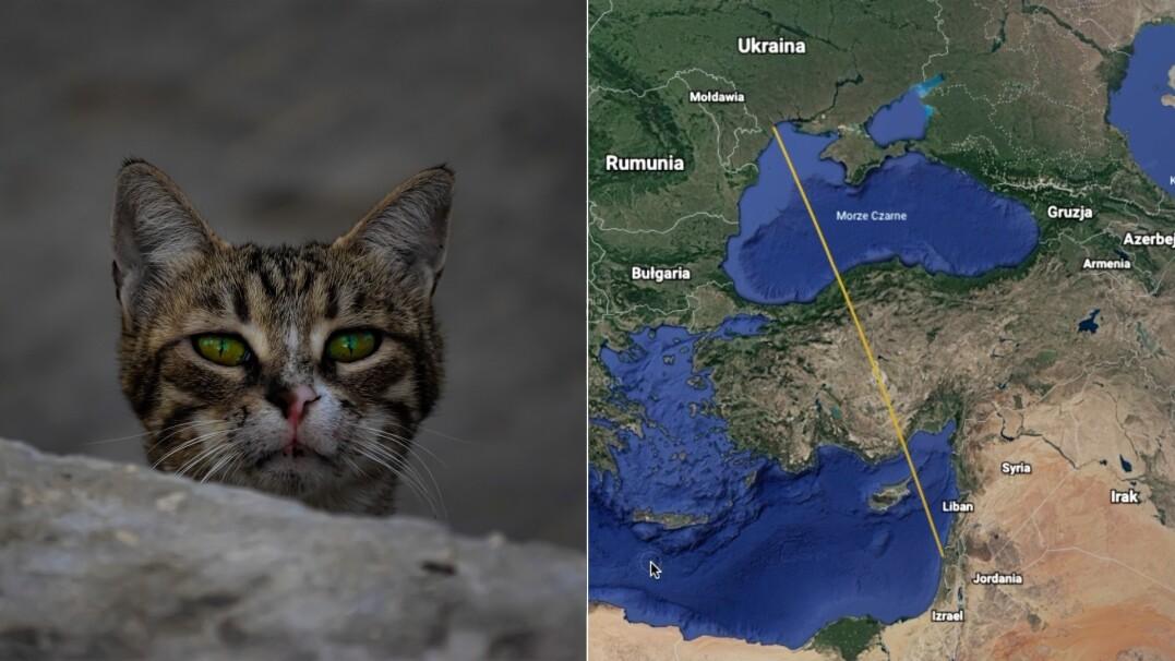 Kot spędził 19 dni w kontenerze. Przepłynął z Ukrainy do Izraela