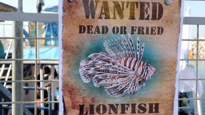 """""""Poszukiwana: martwa albo smażona"""". <br />Chcą zwalczyć ryby grillowaniem"""