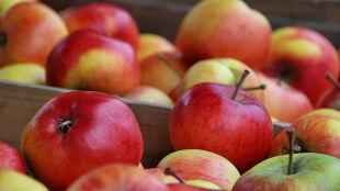 Uwaga na niebezpieczne, brunatne plamki na owocach