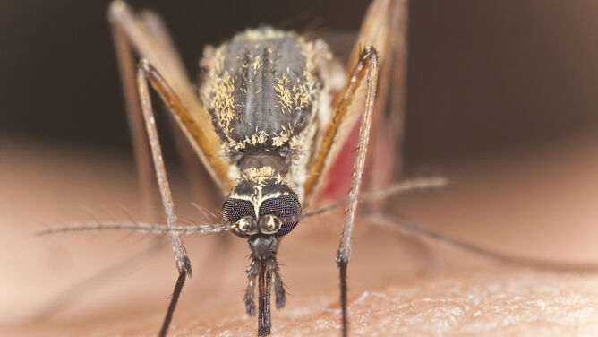 Plaga komarów na Ziemi Świętokrzyskiej. Władze chcą włączyć do walki wojsko