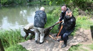 Zdjęcia z odławiania łosia w Parku Skaryszewskim w Warszawie (PAP/Radek Pietruszka)