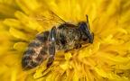 Doktor Paweł Grzesiowski o ukąszeniach przez owady