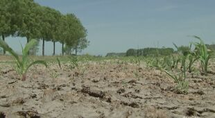 Belgowie zmagają się z ogromną suszą